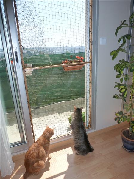 comment s curiser un balcon ouvert forum sur les chats. Black Bedroom Furniture Sets. Home Design Ideas
