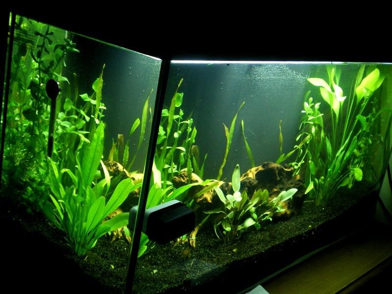 Mon premier aquarium amazonien for Aquarium 600l