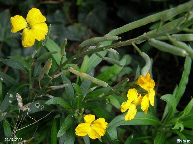 Eveil ..... dans Fleurs et plantes p1223010