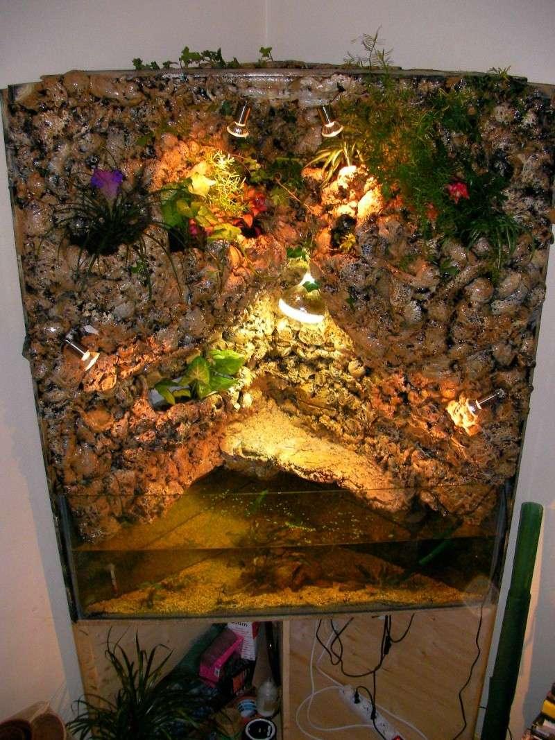Aquarium d 39 angle mur v g tal pour mes tortues for Aquarium angle