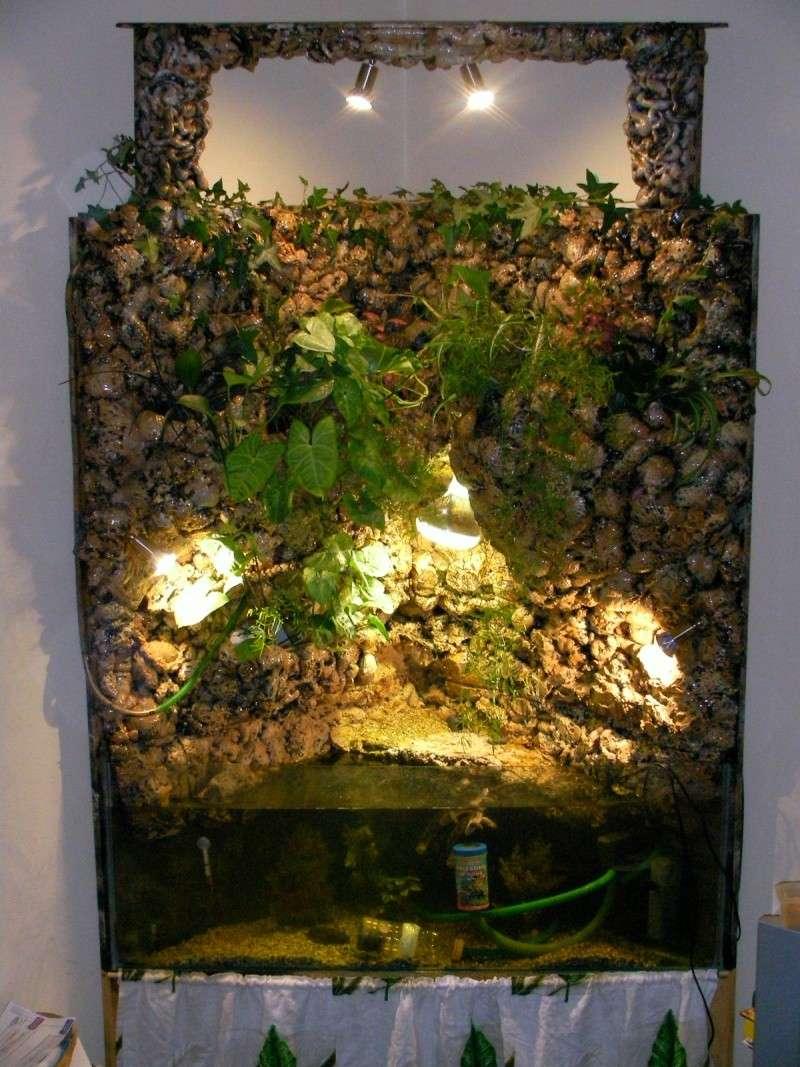 Aquarium d 39 angle mur v g tal pour mes tortues for Mur vegetal aquarium
