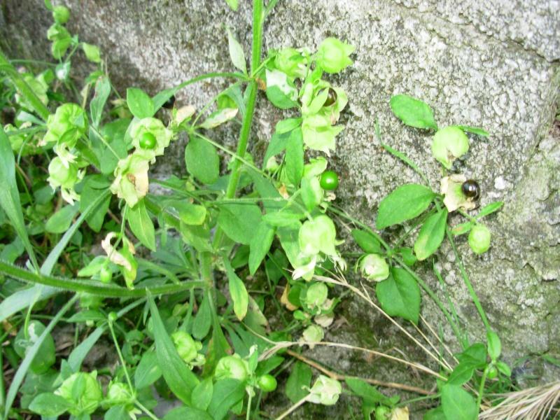 Identifications plantes for Recherche plante
