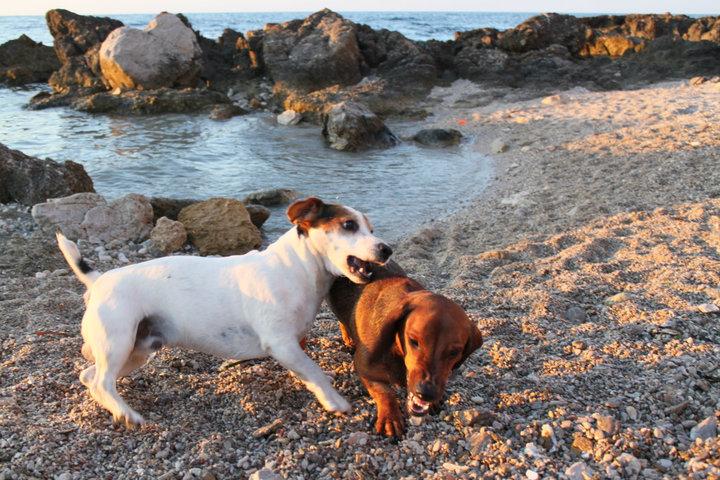 Paco e i suoi amici al mare