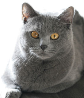 chartreux Mer 10 Sep , 1555