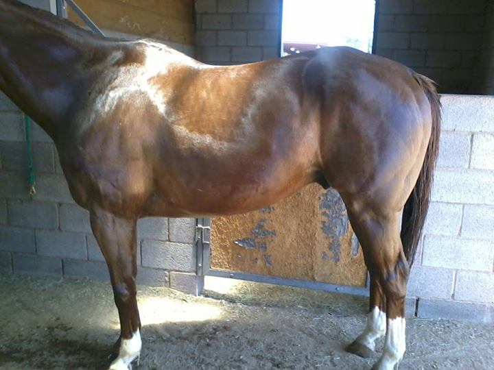 Anhidrosis The Horse Forum