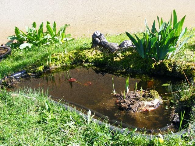 plante carnivore bassin