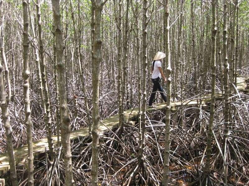 Mangrove au sud vietnam for Plantes par correspondance
