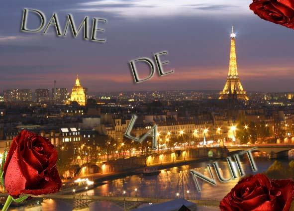 Dame De La Nuit