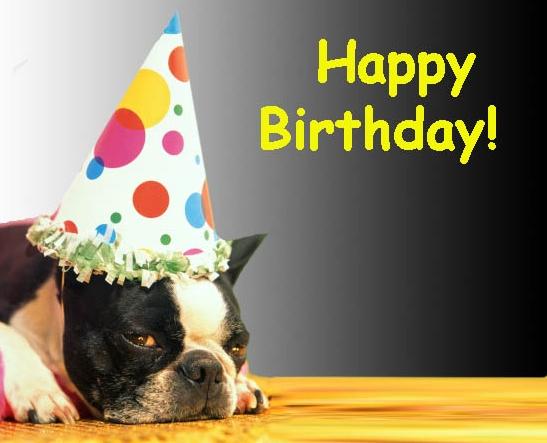 carte anniversaire chien bouledogue francais