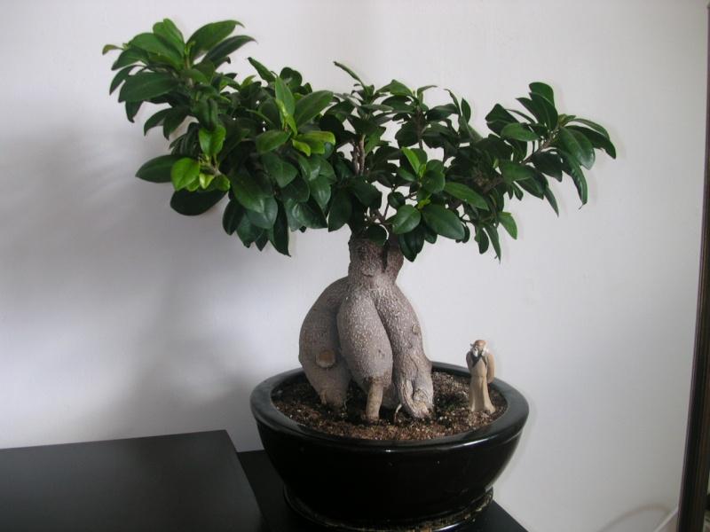 Mes premiers bonsaï vont nécessiter votre aide. - Mes premiers ...