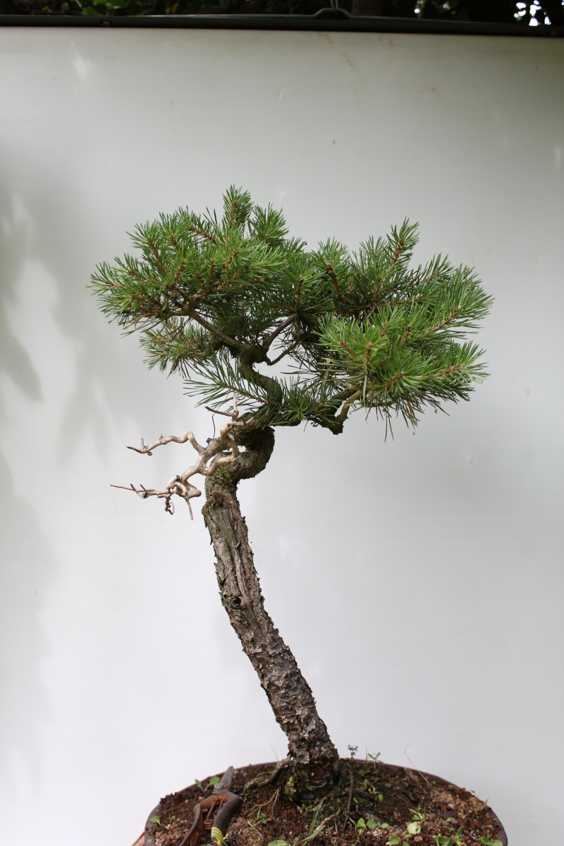 I Am Alone But Happy Images Forest Scots Pine