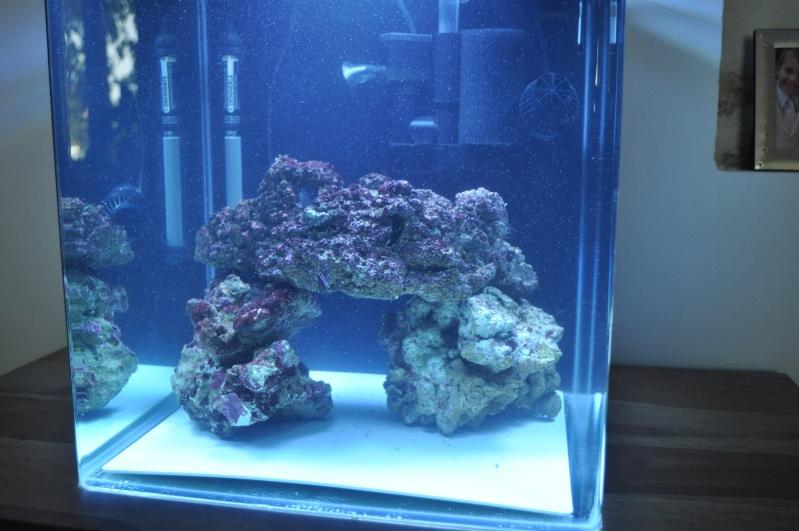 Aquarium recifal 60l for Poisson aquarium 60l
