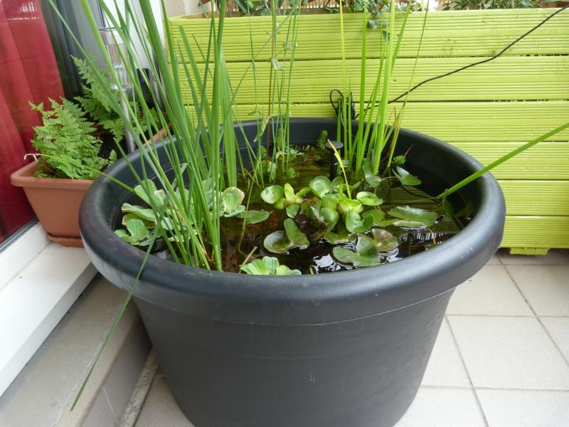 Mini bassin sur mon balcon for Pompe pour bassin aquatique