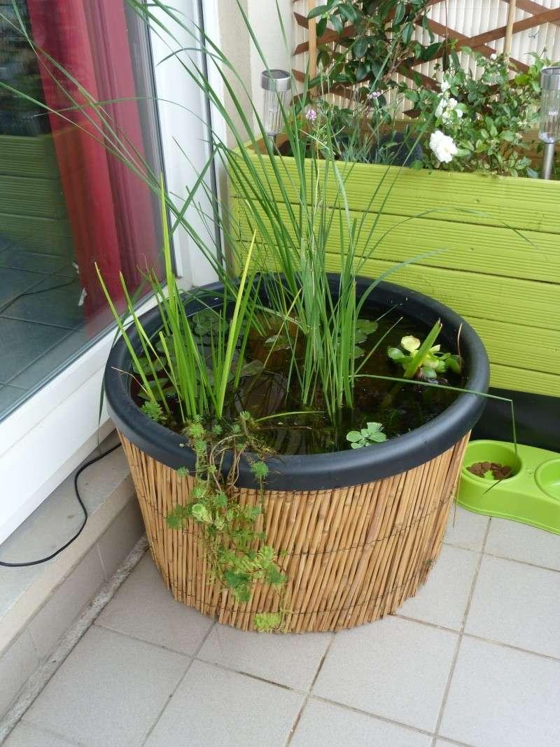 Mini bassin sur mon balcon - Un jardin sur mon balcon ...