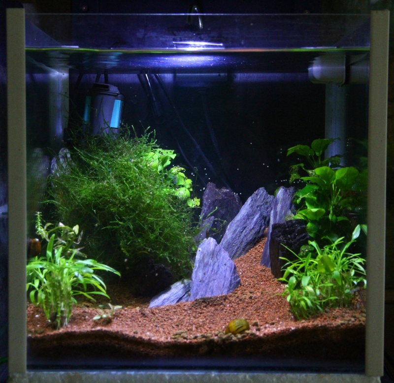 nano cube aquascape images. Black Bedroom Furniture Sets. Home Design Ideas