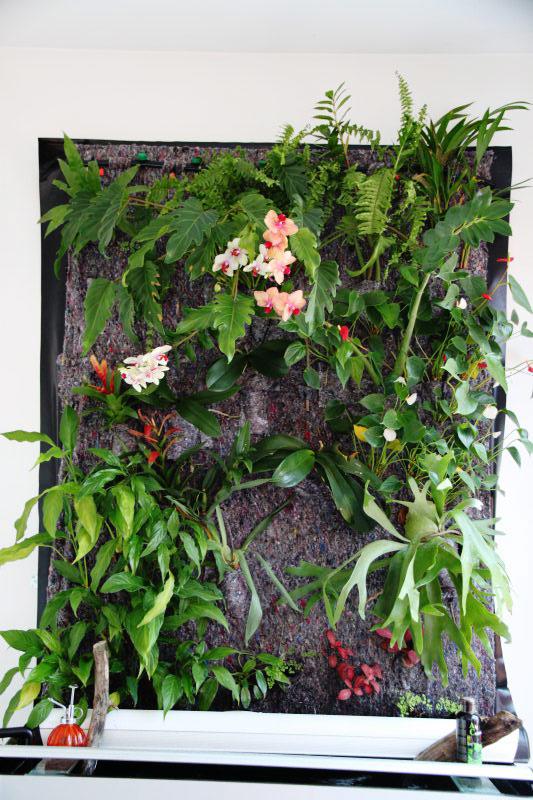 Mur v g tal avec aquarium de 320l paludarium page 2 for Dessinateur paysagiste