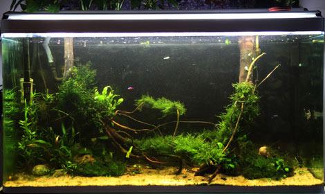Mur v g tal avec aquarium de 320l paludarium page 2 - Cadre vegetal jardiland ...