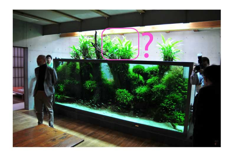 mur v g tal avec aquarium de 320l paludarium page 3. Black Bedroom Furniture Sets. Home Design Ideas