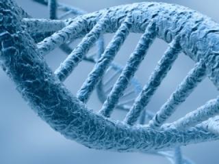 paléoanthropologie - Svante Pääbo - institut Max Planck - Leipzig - Science - Homme de Néandertal - homo neanderthalensis - Homo sapiens - Denisova - Russie - Sibérie - aout 2012 - analyse génétique - génome - forum