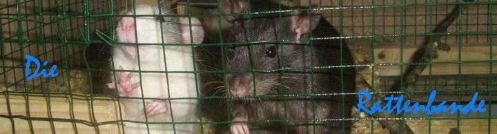 Die Rattenbande