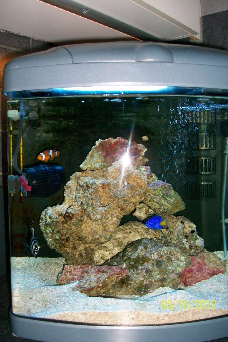 Mon petit bac biotop nano cube 60l for Poisson aquarium 60l