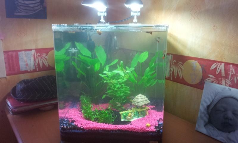 Combien de poisson dans un aquarium de 60l 28 images for Poisson aquarium 60l