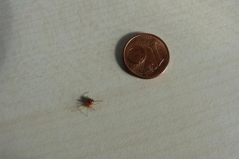 curieuse araign e a identifier. Black Bedroom Furniture Sets. Home Design Ideas